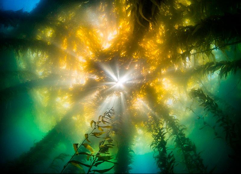 seaweed fertiliser