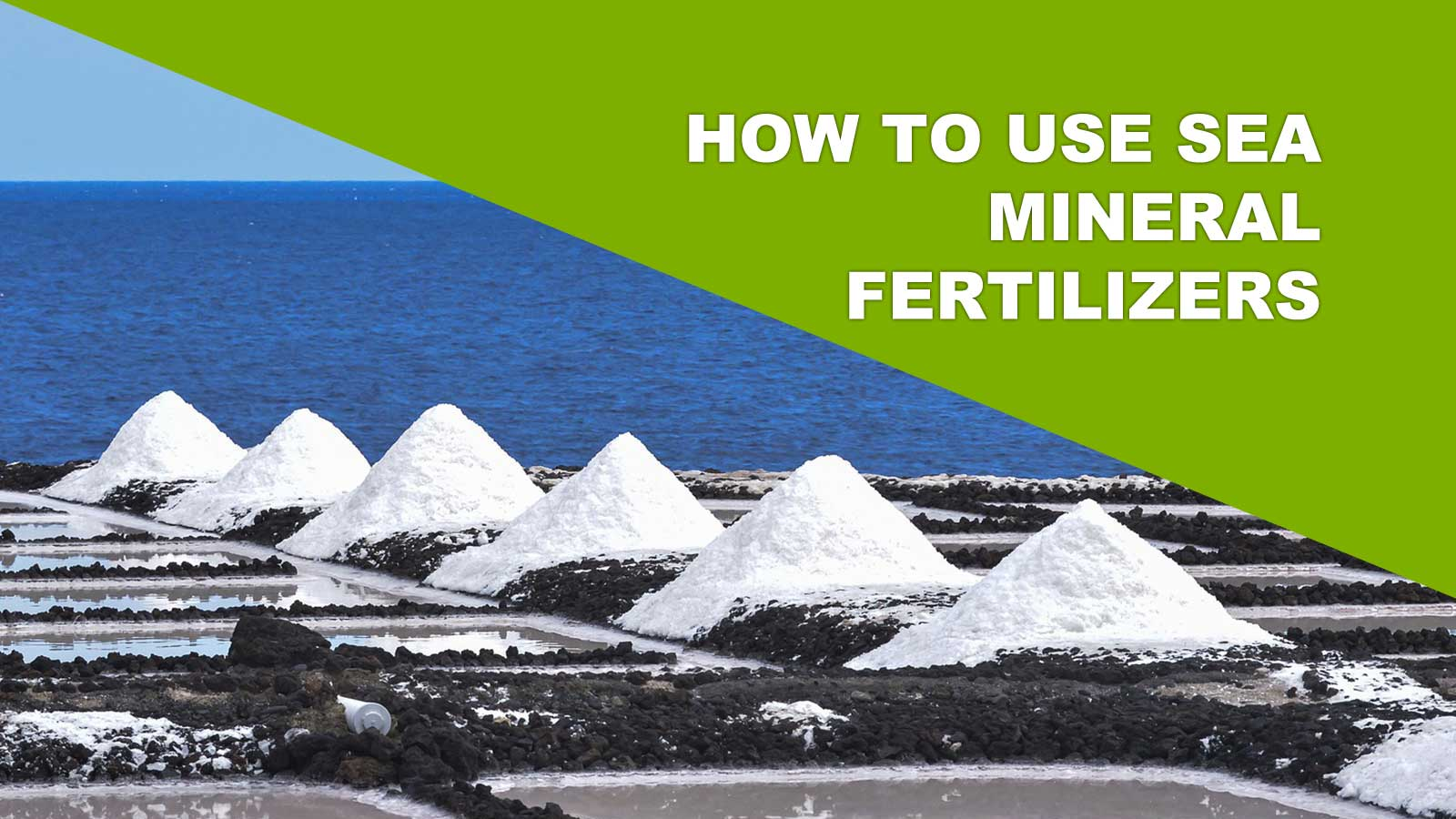 how to use sea mineral fertilizers on plant crops