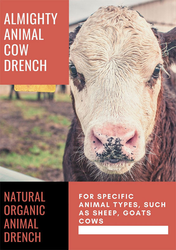 animal cow drench